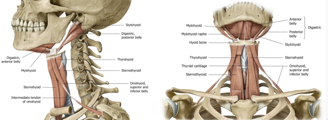 Dolor cervical y articulación temporomandibular - www.medspine.es