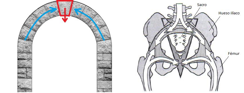 Articulaciones sacroilíacas arco