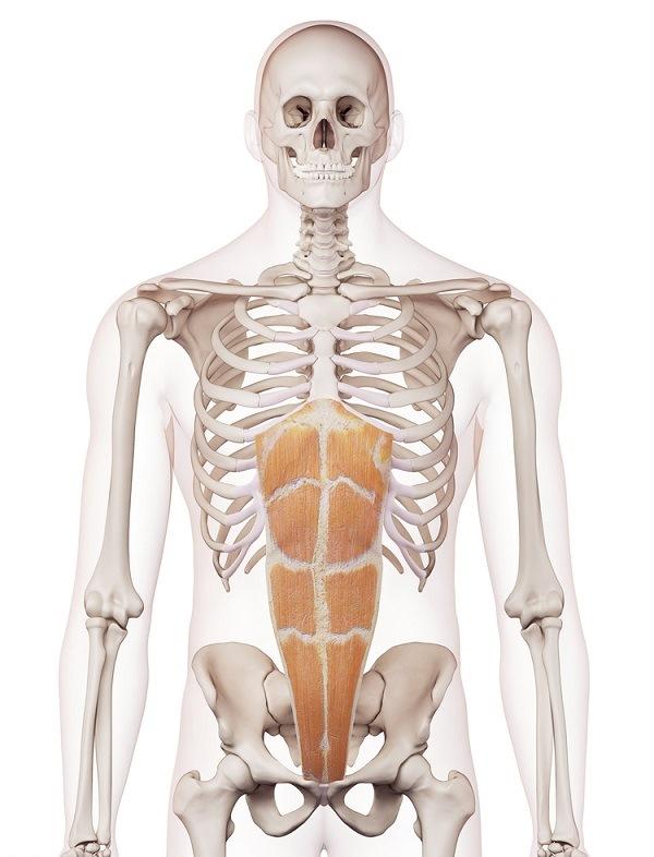 Tengo que hacer abdominales superiores e inferiores? - www.medspine.es